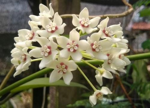 Mostra de Orquídeas e Suculentas em Campinas (Crédito: divulgação)